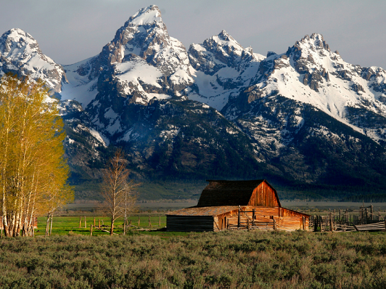 Image of Jackson Hole - Ending Mid-February
